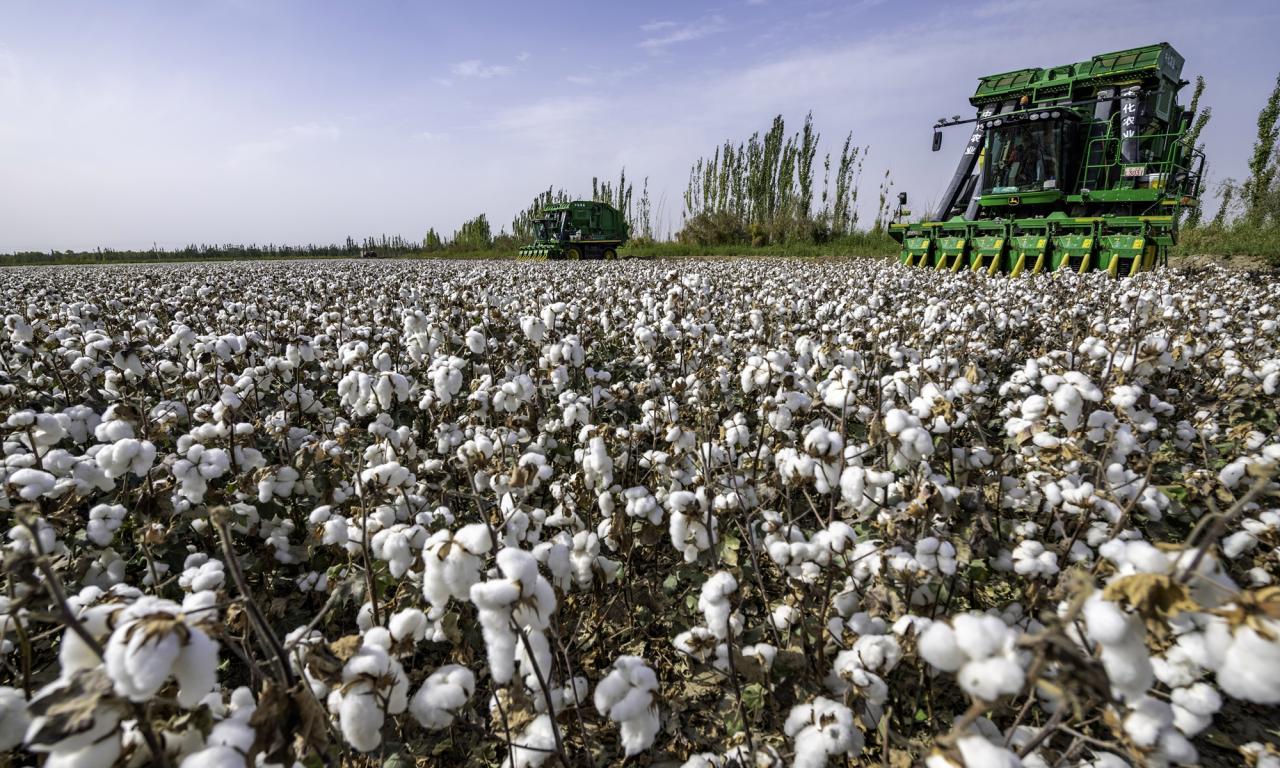 """""""纯白色的棉花不应该被污染!""""中国声音支持新疆"""
