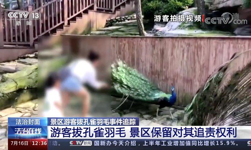 一位母亲为取悦女儿拔孔雀毛在网上引发众怒