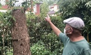 为啥?修剪自己买的香樟树,上海一居民被罚款14.42万元!